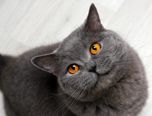 Environmental Enrichment for Whole-Cat Health