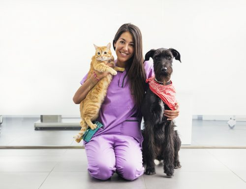 Your Pet's Hero, Our Veterinary Technicians