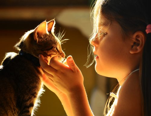 5 Important Pet Behaviors All Kids Should Know