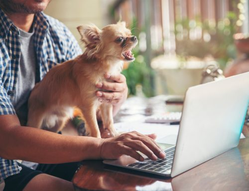 The Value of Virtual Veterinary Care: How to Use Telemedicine for Your Pet