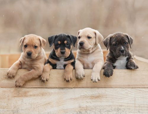Vaccinations Recruit Your Puppy's Immune Army