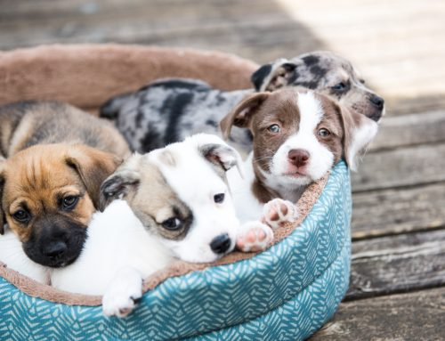 5 Essential Tips for Setting Puppies Up for Success