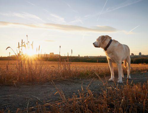 Help Your Pet's Golden Years Shine