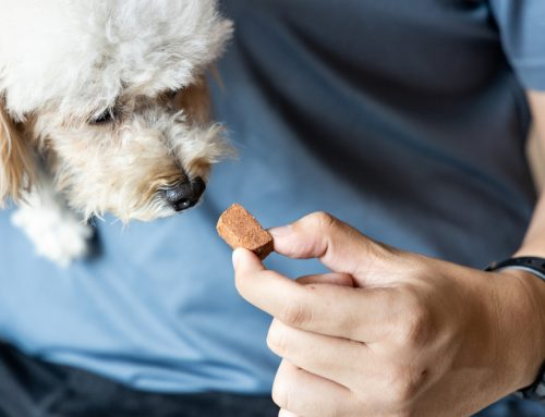 Perplexed By Preventives? Honest Answers About Heartworm, Flea, and Tick Prevention
