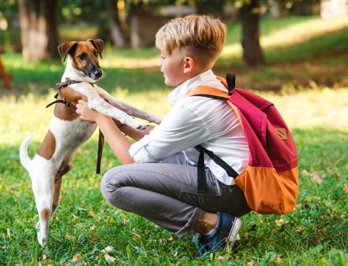 Back to School Safety Do's and Don'ts for Your Pet