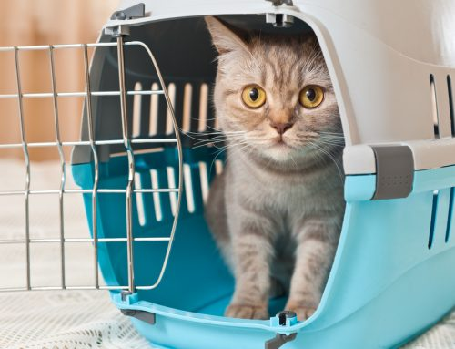 7 Ways to Improve Your Pet's Veterinary Experience